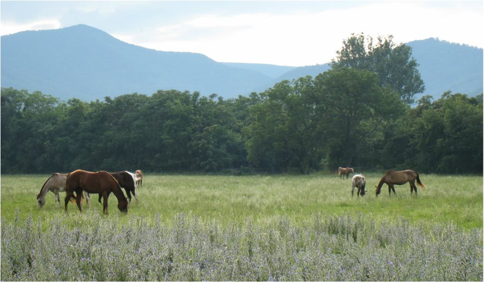 VA Blue Ridge Mountains Horseback Riding