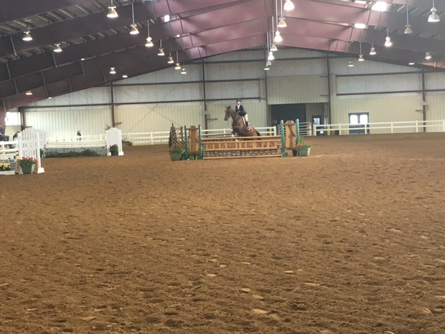 virginia 4-h state horse show