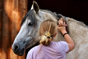 horse lover gifts