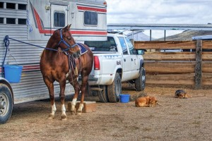 best horse trailer cover